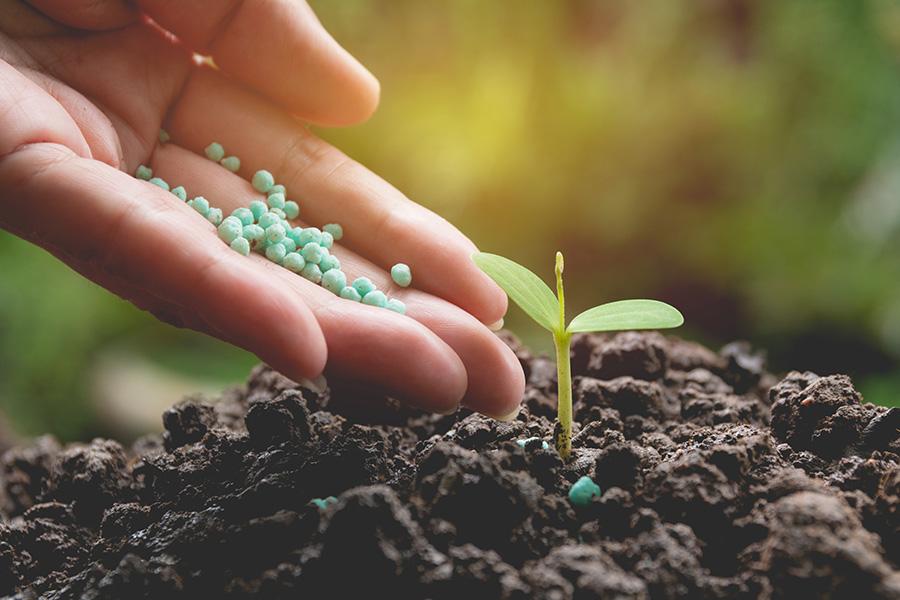 Lawn Fertilization Services