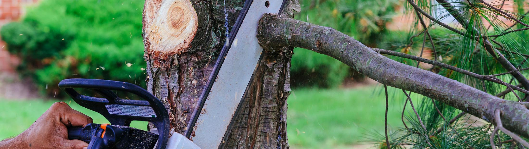 Earthworks Gardens offer tree removal services to get rid of your trees