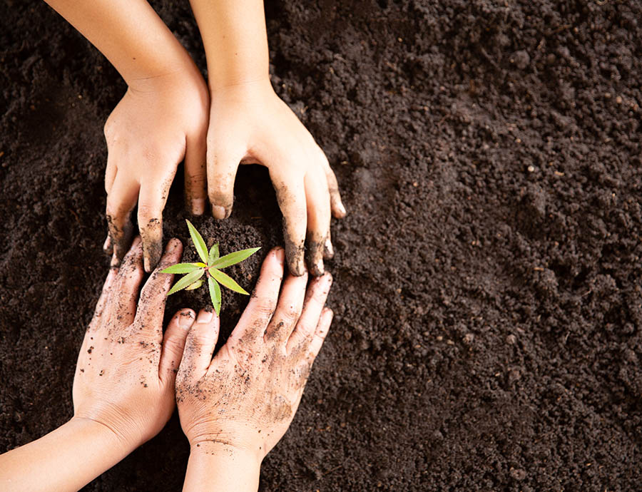 Planting-Services-Earthworks-Gardens-Springfield-MO