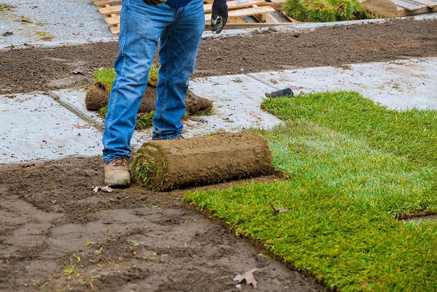 Post-Installation-Practices-Sod-Installation-Earthworks-Gardens Sod Installation