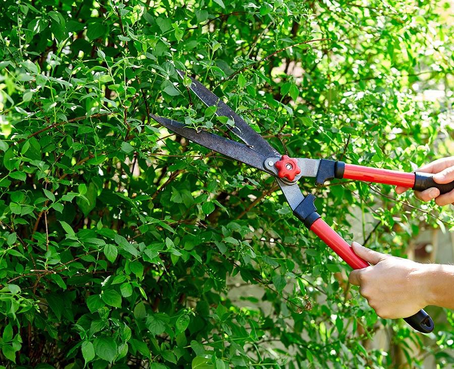 Professional-landscapers-Earthworks-Gardens-Ozark-MO