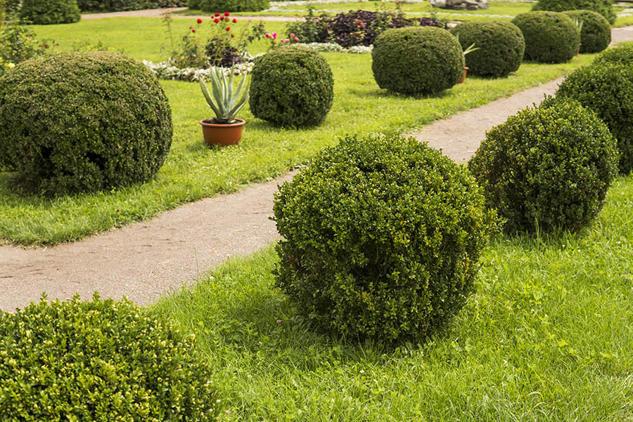 Shrubbery Trimming - Landscaping Services Springfield Nixa Ozark MO